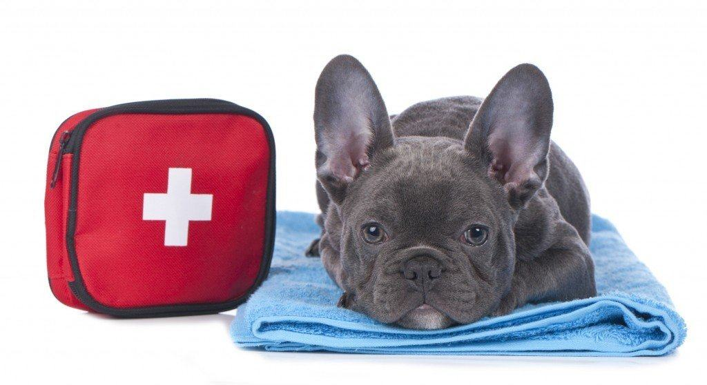 Emergency Veterinarian In Jacksonville